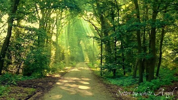 Der Weg zu den Engelswiesen, Setter by white Angel