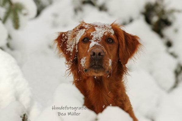 Hundetraining Wahrenholz Welpentraining, Alltagstraining
