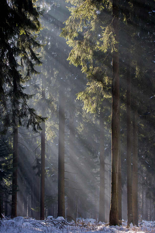 Beautiful light rays in the fog in a forrest in winter, Taunus mountains, Hessen, Germany, Europe