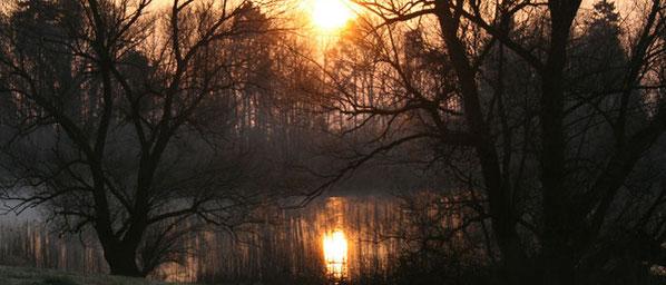 Foto: Mike Stöckli, http://www.bellacherweiher.ch/