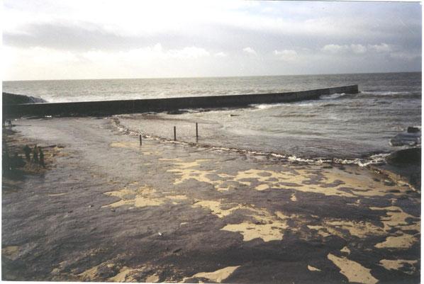 marée noire en 2000