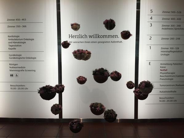 Wertschätzende Kundenbegrüssung: Das St. Claraspital in Basel heisst alle Menschen, die ins Spital hineinkommen, Woche für Woche mit schönen Blumenarrangements von der Blumenwiese in Dornach (wie hier mit «hängenden Blumenschalen») willkommen.