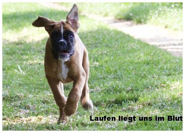 Amy von der Waldnieler Heide Dogscooting