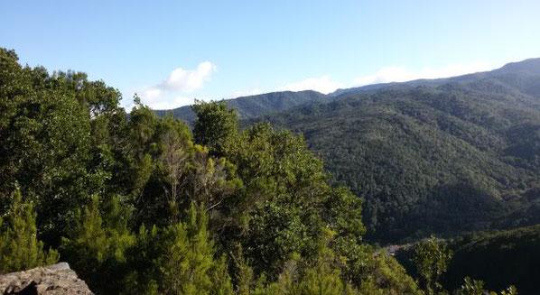 Blick auf den Parque Nacional de Garajonay auf La Gomera