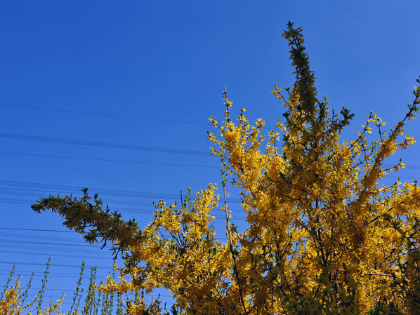 Yellow-Strom