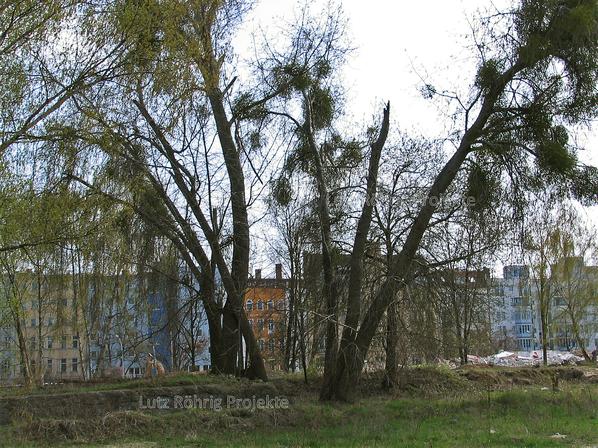 Zollpackhof der Anhalter Bahn, Berlin, Yorckstraße. Abbruch an der Gleisseite. Alte Bäume.