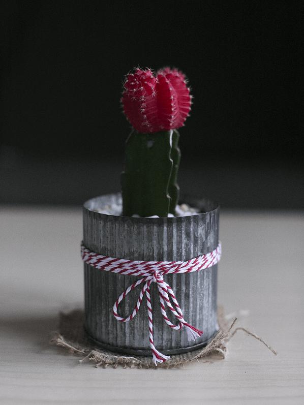 Cactus photographié sans boîte à lumière avec un appareil photo Canon