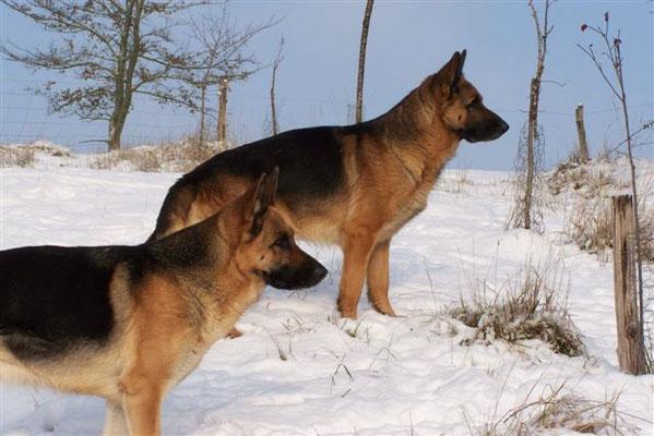 Cheyenne  et  Balkan