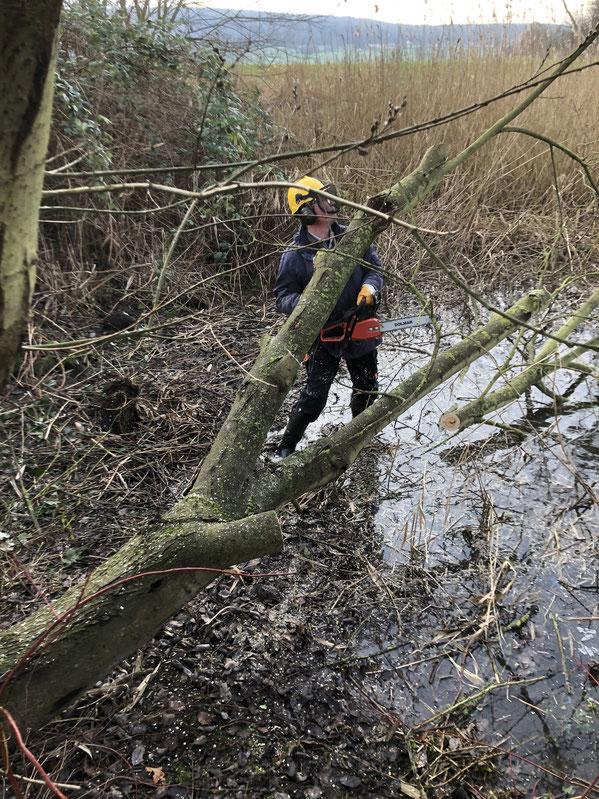 Arbeiter mit Kettensäge steht im Teich und zerlegt die Weide