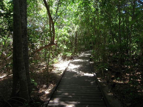 林内のボードウォークの写真