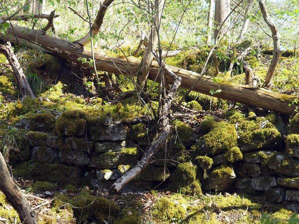 Mauer im Burggraben