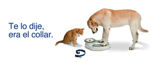 perro gato peso