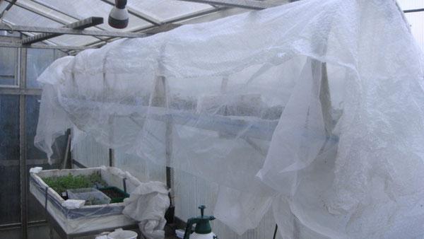 20/03/2013 Mi mars les plants sont repiqués un par un (et oui ^^ il en faut des pots !) sur des étagères avec une protection avec un voile d'hivernage voire un papier bulle pour les fortes gelées.
