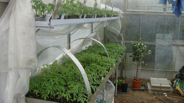 15/04/2013 Mi avril voilà que les plants sont prêts à la vente