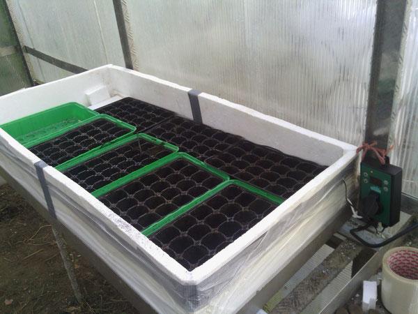 les semis cultiver les tomates. Black Bedroom Furniture Sets. Home Design Ideas