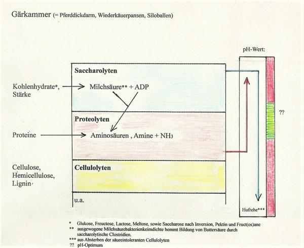 Antagonismen des Mikrobioms