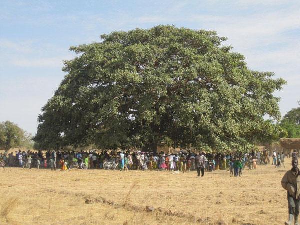 Treffen unter dem Versammlungsbaum