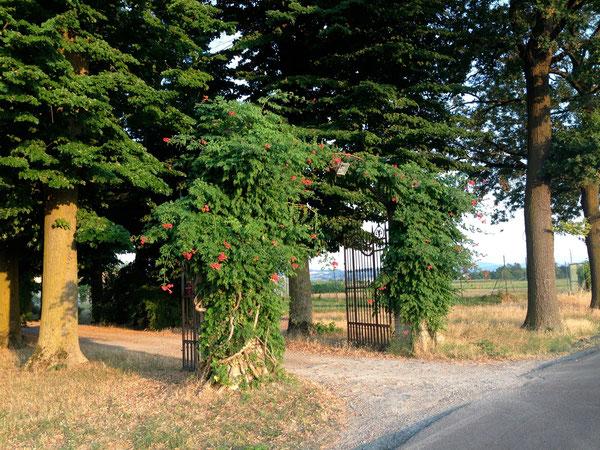 Ingresso di una casa di campagna, sulla strada che da Piumazzo va a Bazzano, dopo la passerella del Samoggia