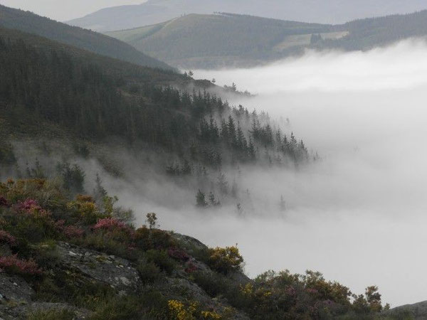 Le macchie di erica, le rocce, i boschi, le valli, la nebbia, l'immensità, la solitudine ... questo è il Cammino Primitivo