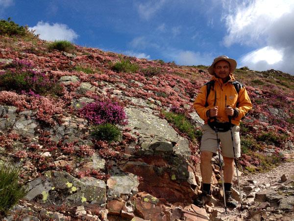 TUTTO CANTA E GRIDA DI GIOIA - Fiori sulle montagne delle Asturie, fiori al ritorno a casa. fiori nel cuore ...