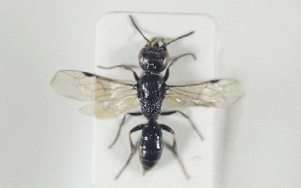Arnstein Staverlokk, Norwegian Institute of Nature Research