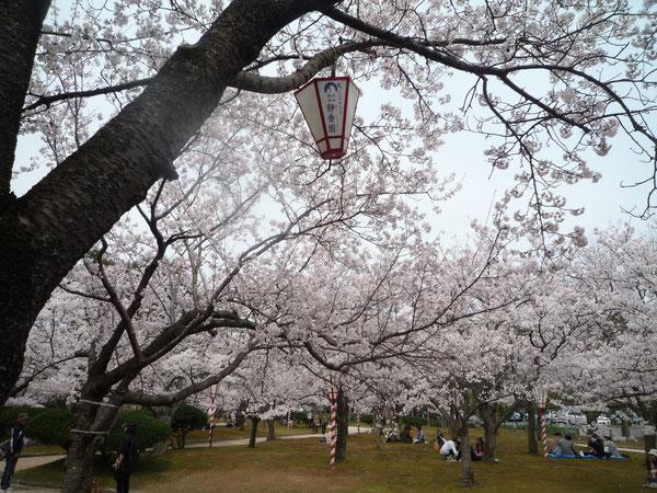 湊山公園・春