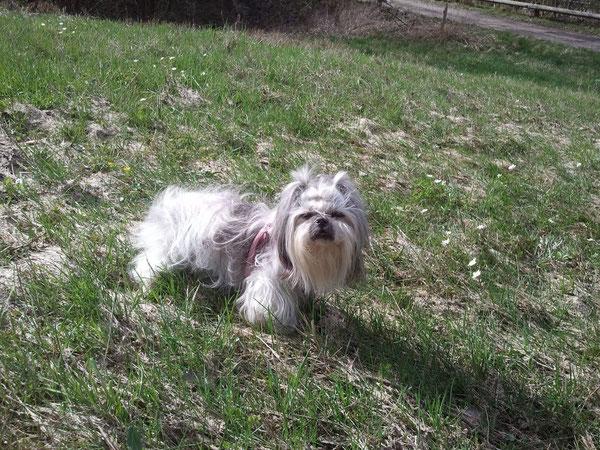 Lily le 29 mars 2012