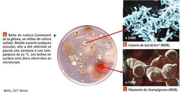 Boite de pétri laissée ouverte quelques minutes dans laquelle de nombreux  champignons et bactérioes en multiplication. Source: SVT BELIN, 3ème