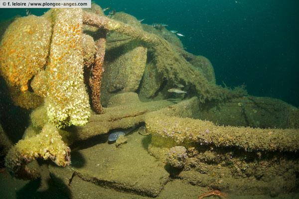 Qui plonge verticalement dans une mer profonde en parlant d'une côte