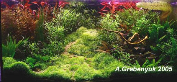 аквариум Александра Гребенюка (Украина)