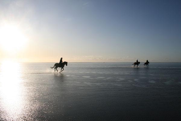 Bild: Ausritte im Wattenmeer vor Cuxhaven Duhnen