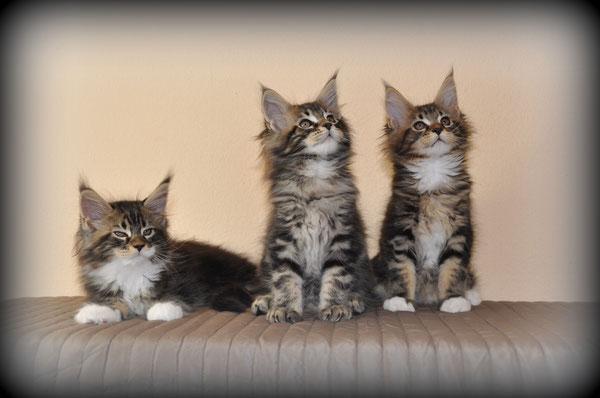 les garçons;  Loubi, Lenny, Lennon