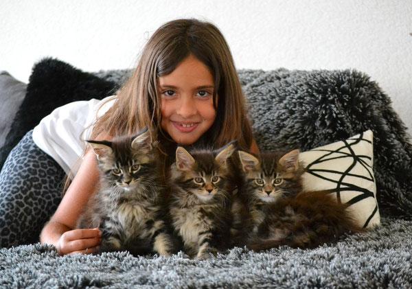 élevage familial de maine coins voici nos chatons Black tabby