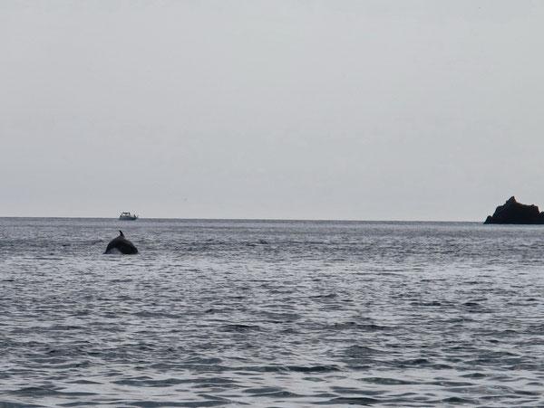 На Фиоленте резвятся дельфины