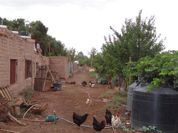 mal andere Impressionen: die unverputzte Rückseite von adobe-Häusern, die Haustiere und der Weinberg