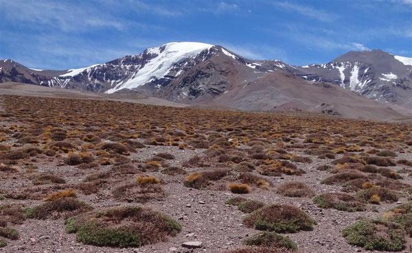 unerwarteterweise gibt es auf mittlerweile 4000 m Höhe auf einmal Vegetation: tiefgelbe Gräser