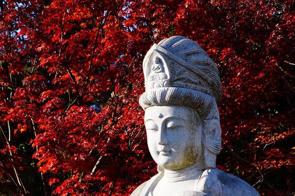 お寺の中にも紅葉スポットがたくさん。まだまだ続きます・・・