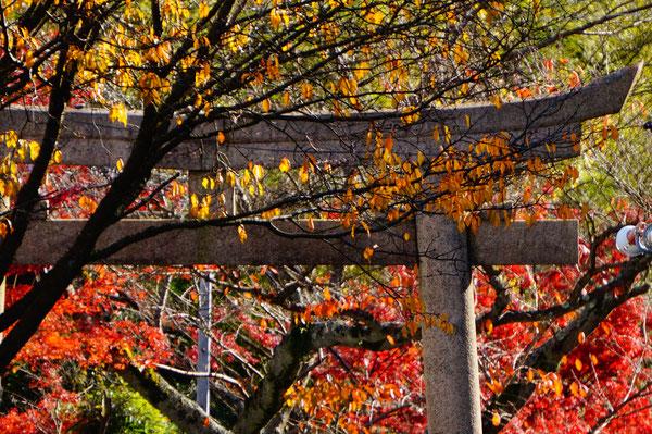 由加神社の階段を上がっていきます。次回もお楽しみに!