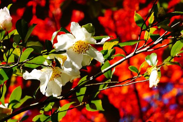 由加山に行く途中でみつけた花。