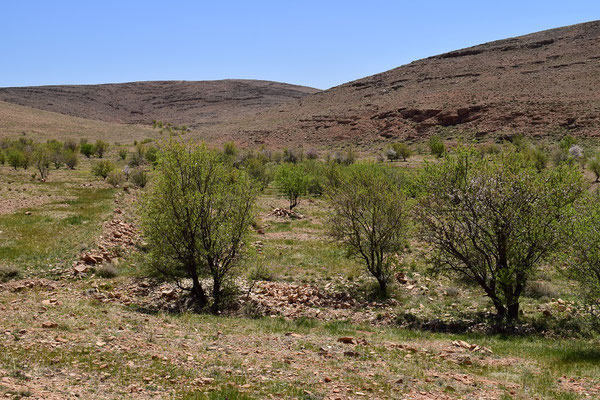 Habitat, région d'Igherm, Anti-Atlas sud-occidental, 2018, ©Frédérique Courtin-Tarrier