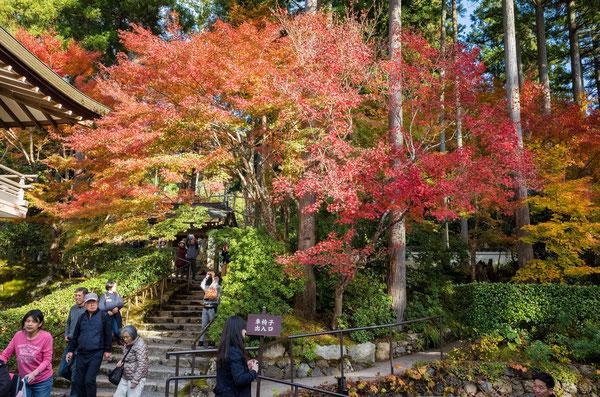 京都大原三千院の紅葉とお地蔵さん