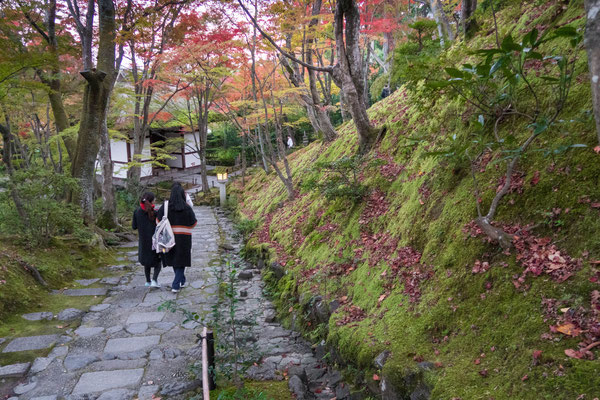 京都嵐山 常寂光寺の紅葉