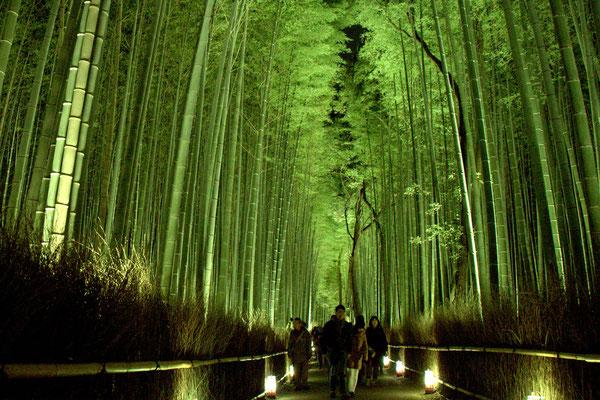 嵐山竹林ライトアップ