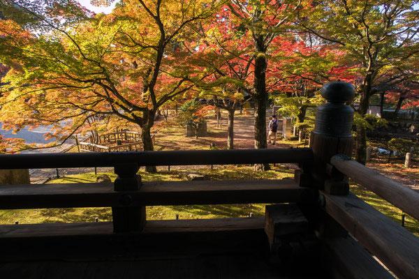 京都・真如堂紅葉