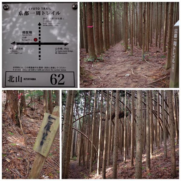 【京都トレイル北山西部コース】「北山62」