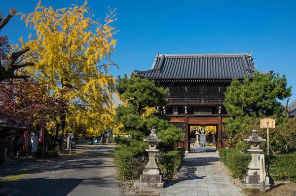 京都 頂妙寺イチョウ