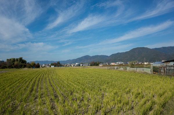 京都亀岡の田園風景