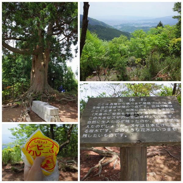 京都一周トレイル 北山東部コース 玉体杉