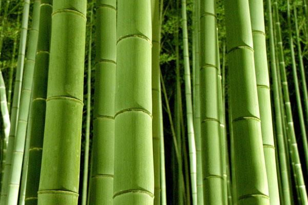 嵐山 竹林ライトアップ