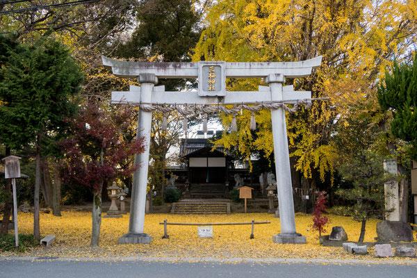 京都伏見紅葉イチョウの穴場三栖神社